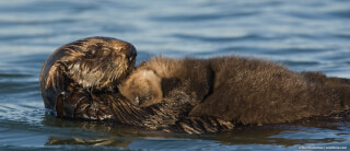 otters-go-with-the-flow