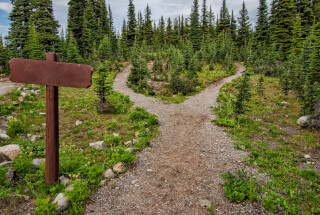 photo-of-pathway-surrounded-by-fir-trees